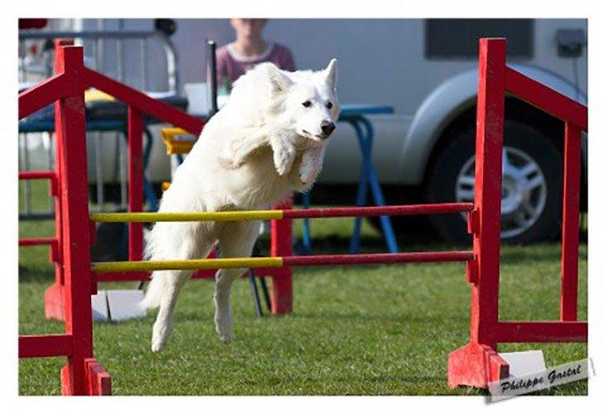 agility saut en hauteur