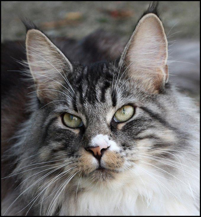 Rencontre avec Billy, un grand chat plein d'amour.