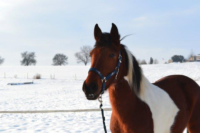 Rencontre avec Arsouille, un petit poney magique !