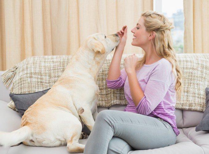 Un chien apprend l'éducation positive grâce aux récompenses