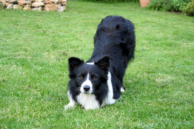 Rencontre avec Filou, un chien qui porte bien son nom !