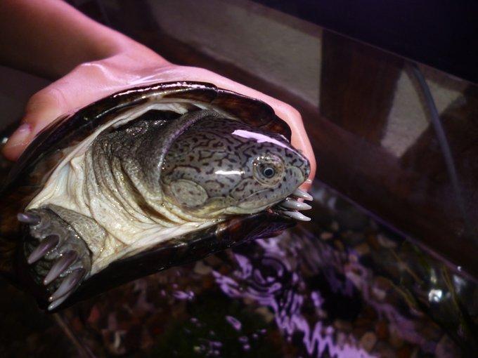 Rencontre avec Lulu, une super tortue!