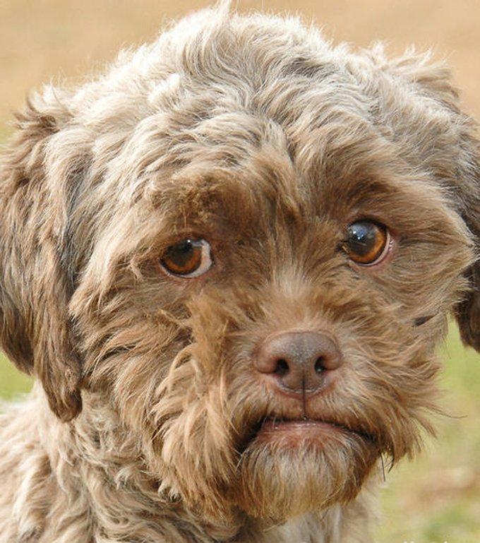 tonik-est-un-chien-a-la-gueule-ressemblant-etrangement-a-un-visage-d-humain_115446_w460