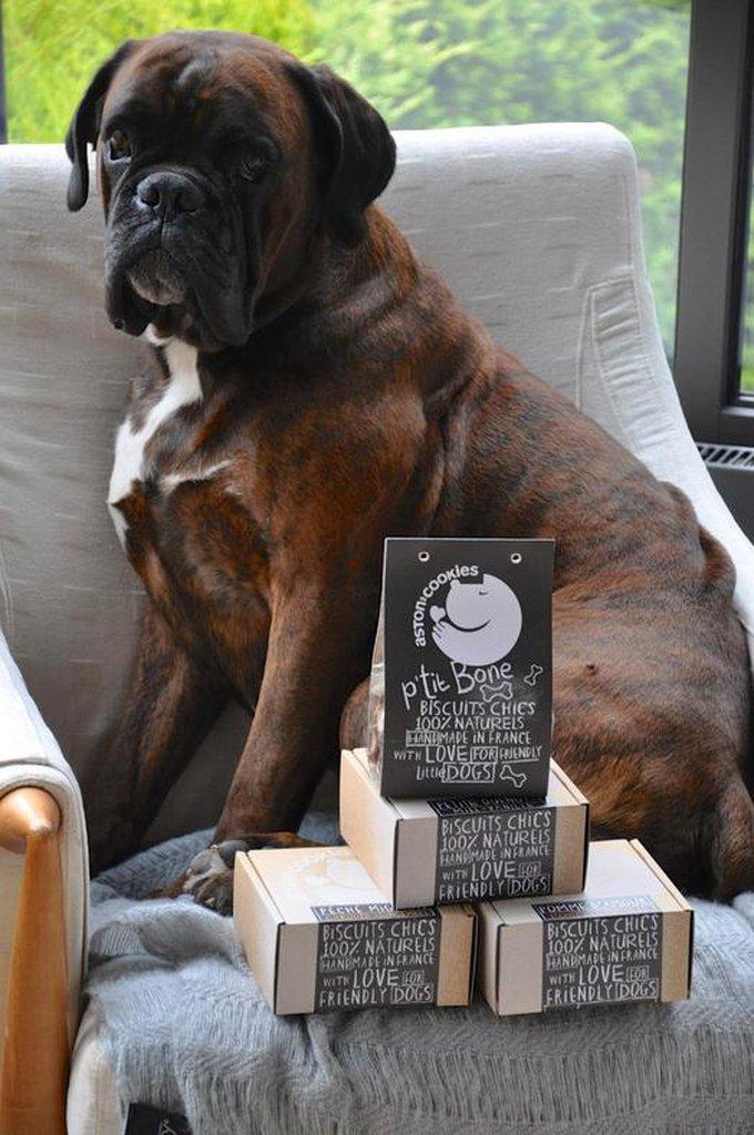 Rencontre avec Aston's Cookies, les gâteaux que tous les chiens vont s'arracher !