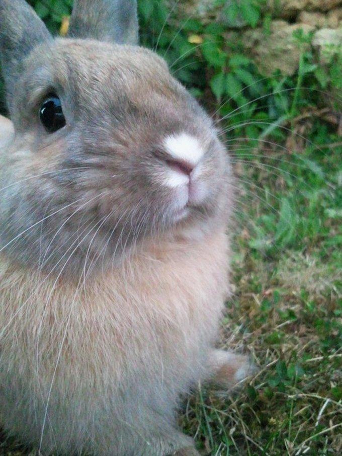 Rencontre avec Pespi, un lapin pétillant !