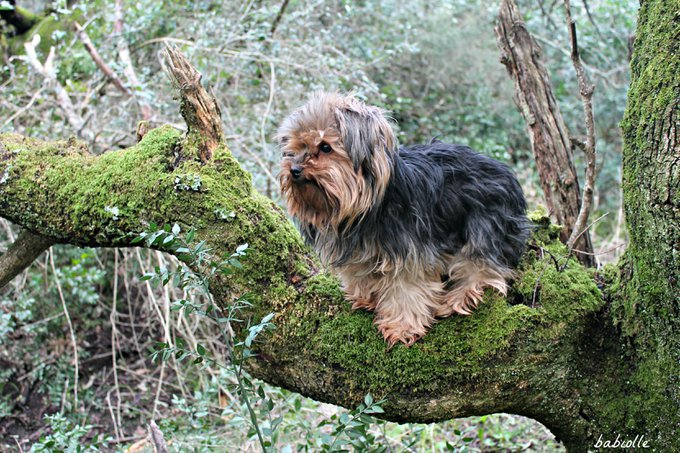 Rencontre avec Babiolle, une petite chienne très câline.