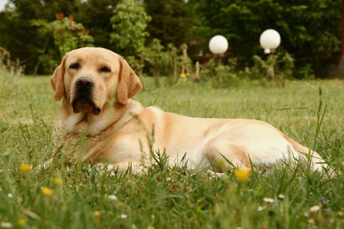Top 10 des races de chiens les plus adaptées aux enfants