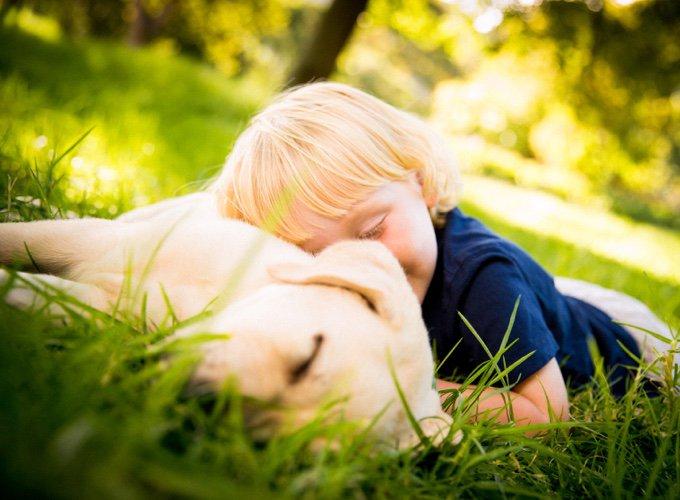 labrador avec un enfant