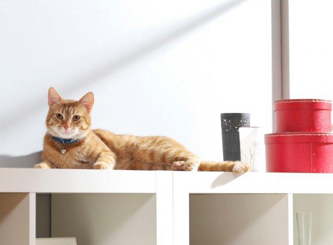 Chat roux sur une étagère