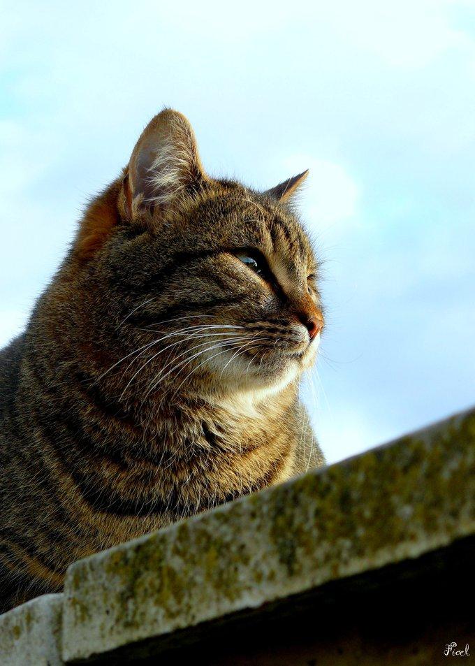 Rencontre avec Ficel, un chat qui tire un peu sur la corde !