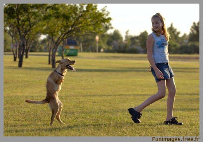 Découvrez Faith... Une chienne à deux pattes !