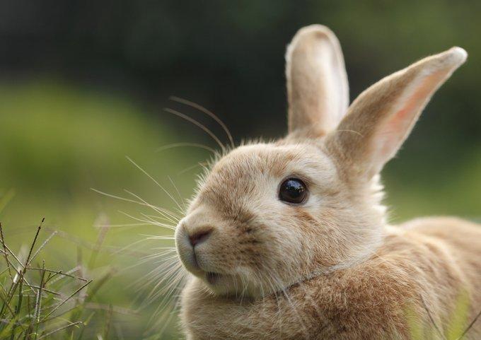 Les différents types de lapin