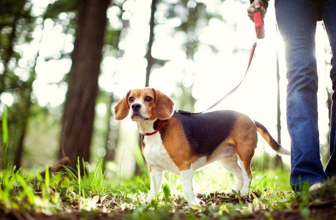 perro paseo en el campo