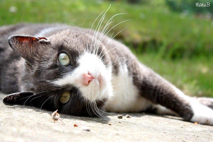 Rencontre avec Nounou, une chatte d'enfer !