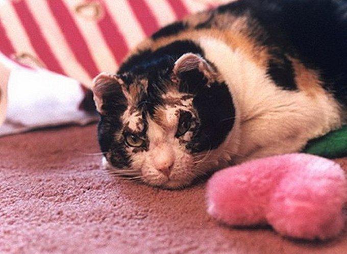 Découvrez l'histoire de Scarlett, une chatte incroyable !