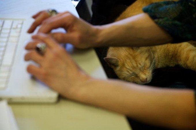 Découvrez Simba : un chat ayant élu domicile dans une école !