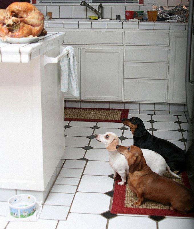 A vos fourneaux : c'est la recette de la semaine pour chien !