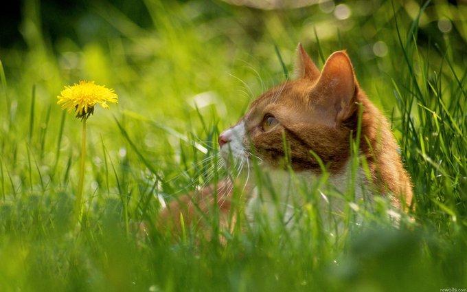 Certaines plantes sont toxiques pour vos animaux de compagnie!