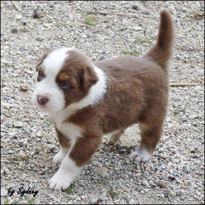 Rencontre avec Helios, un chien qui a grandit sur Yummypets!