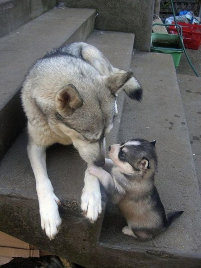 Quand les petits ressemblent aux parents... Yummypets