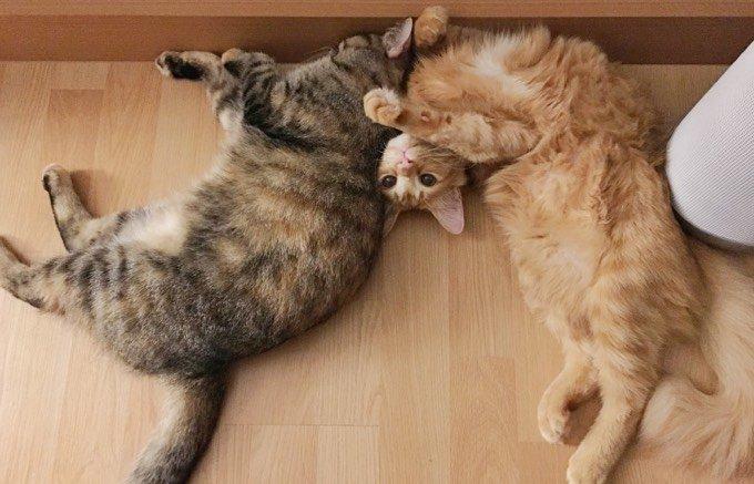 Deux chats s'amusent