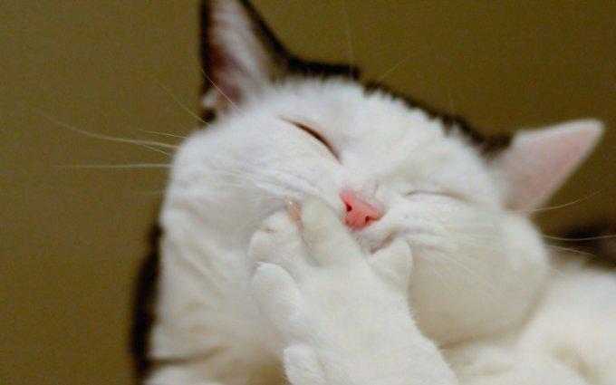 Chiens - chats : tous concernés par l'hygiène dentaire.
