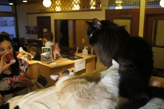 Un bar à chat à Paris ? A vous de décider !