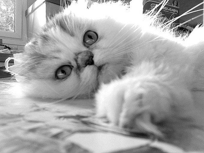 Rencontre avec Paprika, un chat pimenté !