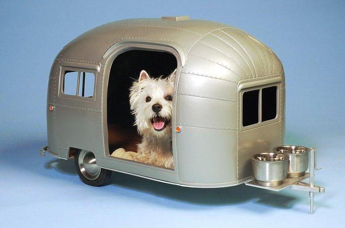 Votre chien est-il un chien de niche ou de panier ?