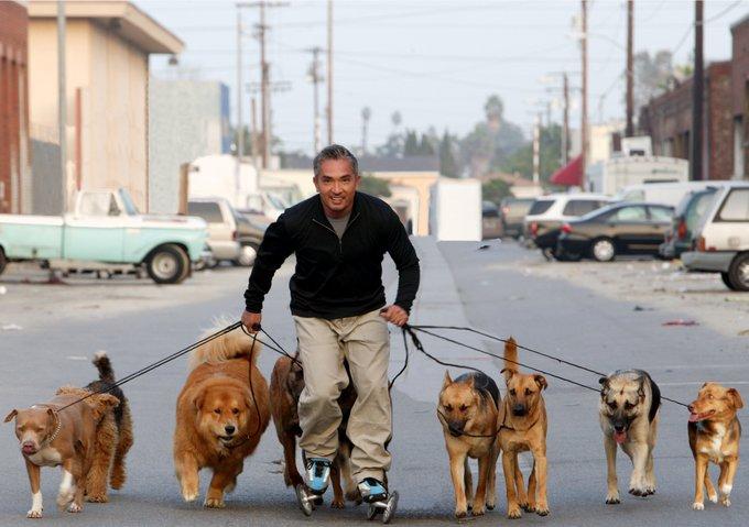 Cesar Millan : l'homme qui parle aux chiens