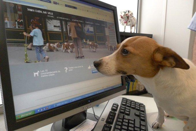 Rencontre avec OKA, on avance, pour la réhabilitation du chien en ville