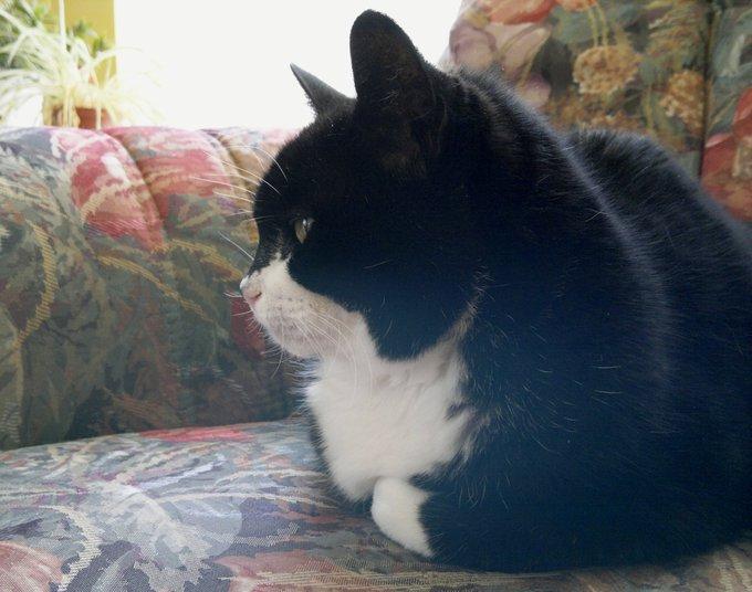 Rencontre avec Potdcoll, la chatte velcro de Yummypets !