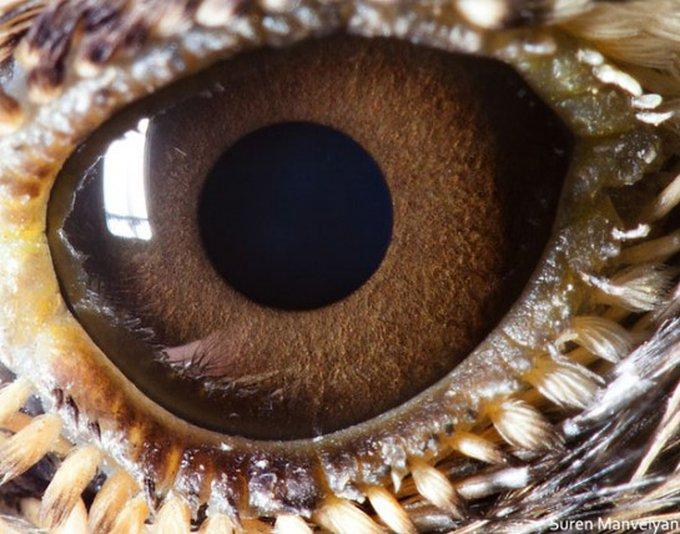De magnifiques photos d'yeux d'animaux