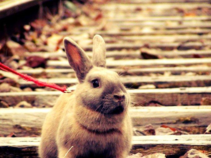 Rencontre avec Châtaigne, la crème des lapins !