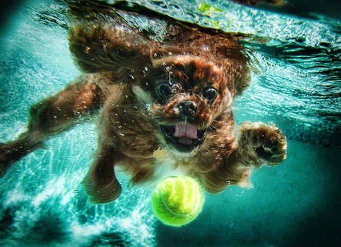 Les photos de Seth Casteel, un photographe qui a du chien ! - Yummypets