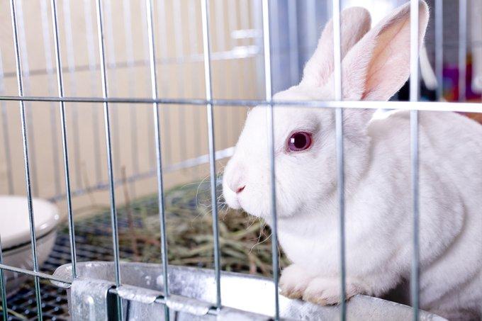 lapin ronge les barreaux de sa cage