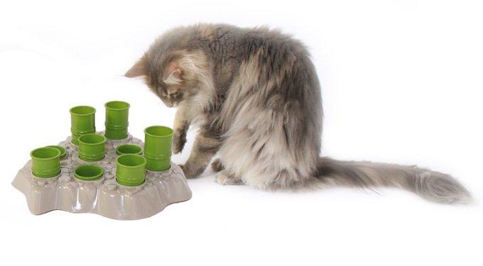 chat jouant avec le stimulo