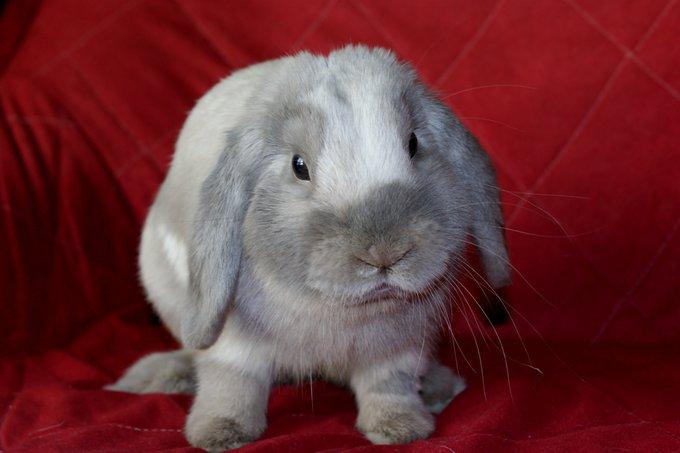 Rencontre avec Triskel, un lapin ? un chien ? un chat ?