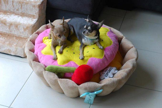 Rencontre avec Dinky Paws, boutique en ligne pour petits chiens !