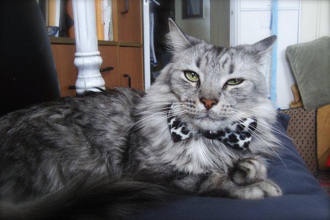 Rencontre avec M&M, un chat terriblement craquant !