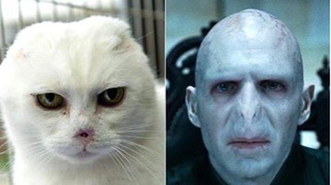 Suite à un cancer de la peau, des vétérinaires ont dû retirer les oreilles et le nez de Charlie ce qui lui donna une étrange ressemblance avec Lord Voldemort, le grand ennemi de Harry Potter. Cette apparence l'empêcha longtemps de trouver une famille mais après qu'une annonce ait été passée sur Internet, son histoire hors du commun toucha de nombreuses familles qui voulurent l'adopter. C'est finalement Sarah Gaden, gande fan des romans Harry Potter, qui accueillit l'animal.