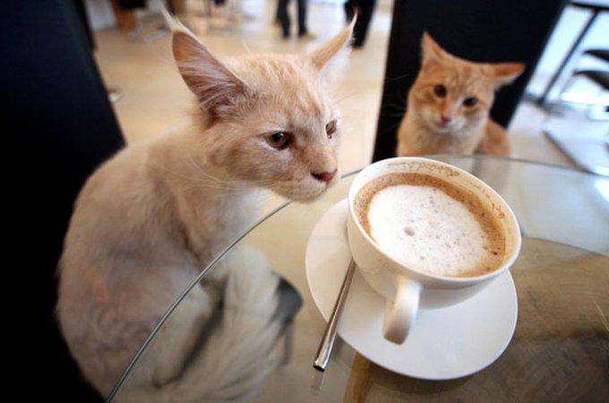 En savoir un peu plus sur le premier café des chats à Paris !