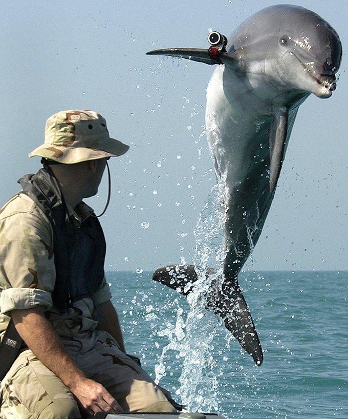 La Navy emploie des animaux marins !