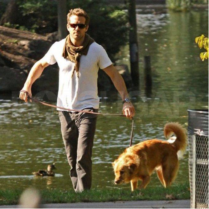 12. Baxter (Ryan Reynolds)