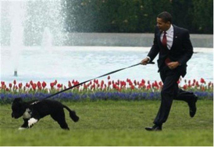 6. Bo (Barack Obama)