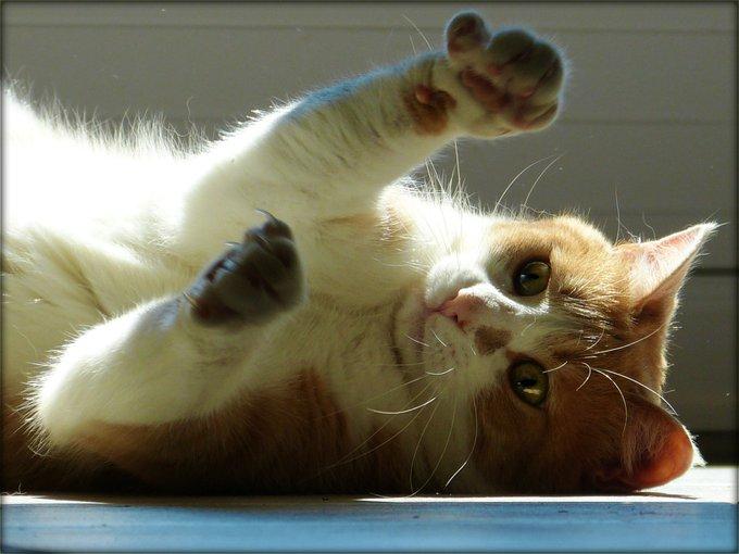 Rencontre avec Flash, un chat qui vous éblouit !