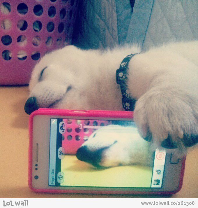 adorable-dog-is-taking-a-selfie_261308-612x