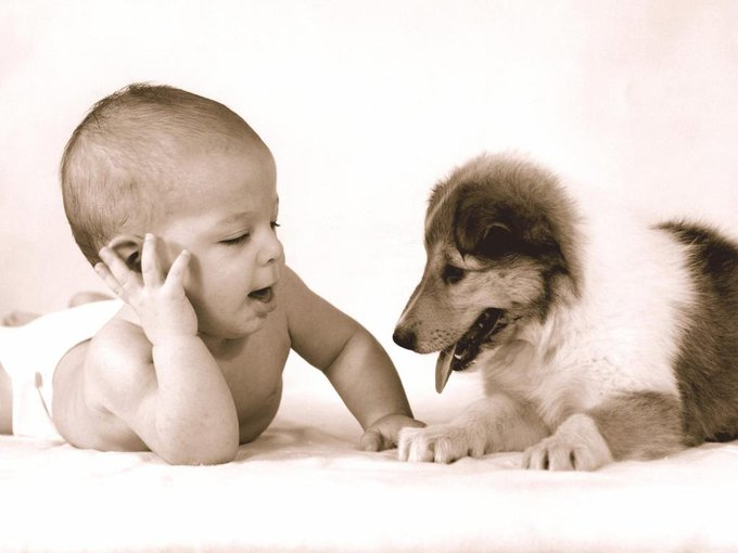 En savoir plus sur la jalousie animale