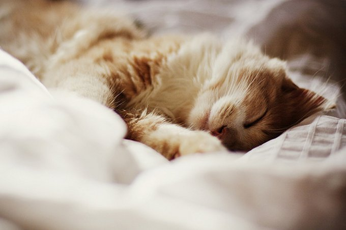cat-beautiful-cute-vintage-bed-sweet-amazing-sleep-photo-photography-favim-com-461770