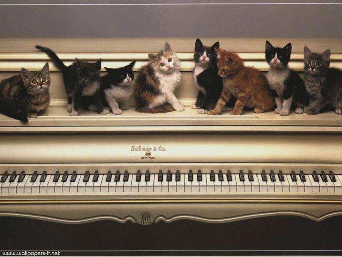 Comment les animaux réagissent-ils à la musique ?